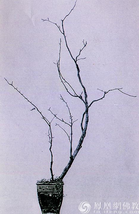品种:蜜梨。作者:素仁。(图片来源:广州市海幢寺)