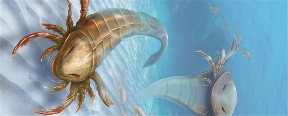 巨型远古蜘蛛祖先:身长能达1.5米 腿能当桨划
