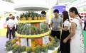 2019广东·东盟农产品交易博览会精彩回顾
