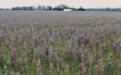 """美国农场濒临破产 美专家:中美""""很快""""会谈"""