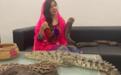巴基斯坦女星饲养鳄鱼蟒蛇 还耍蛇恐吓印度总理
