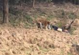 【89期】老虎咬人事件启示:学会与一切生灵的和睦共处