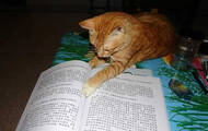《有情》第四期:我家宠物爱学佛