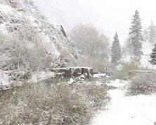 新疆东天山降雪景致似水墨画(图)