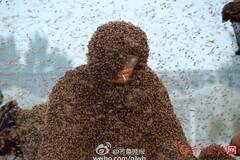 山东男子挑战百万蜜蜂蛰身