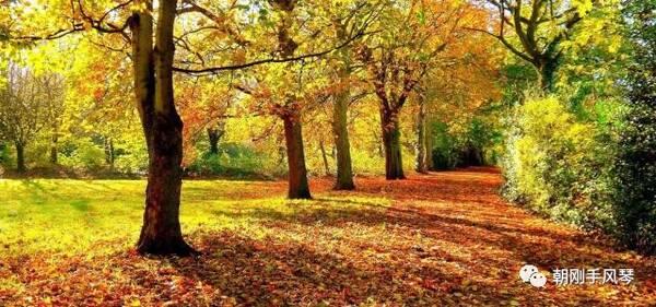 美好的一天從手風琴曲《美麗的秋天》開始