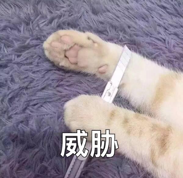 甘肃艹.: