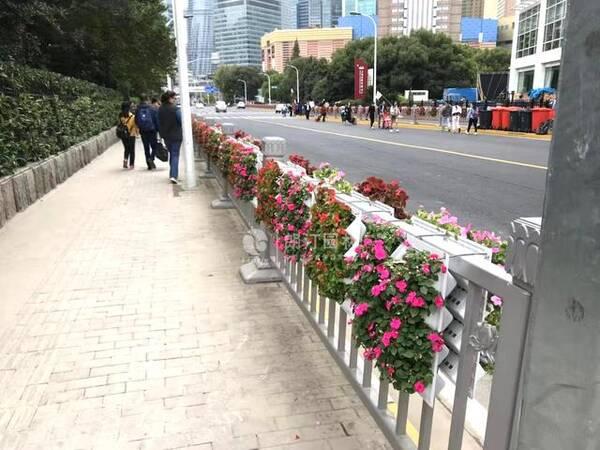 上海陆家嘴丰和路焕然一新,护栏挂花扮美生态上海