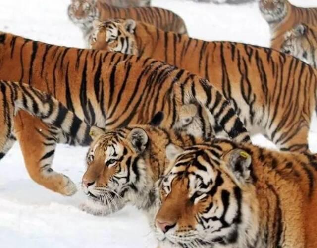 你是不是虎_胖虎,是你吗胖虎!