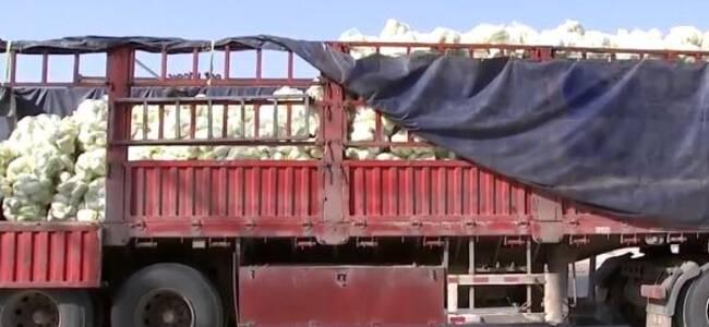 退役军人自费购买30吨娃娃菜驰援石家庄