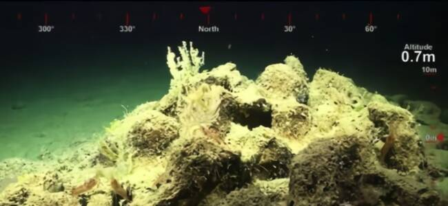 比帝国大厦还高!大堡礁发现500米高珊瑚礁